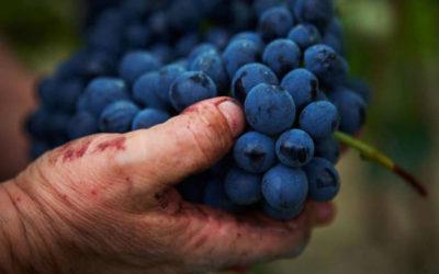 Serata di degustazione vini: la Barbera