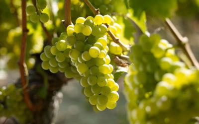 Serata Degustazione: Il Sauvignon
