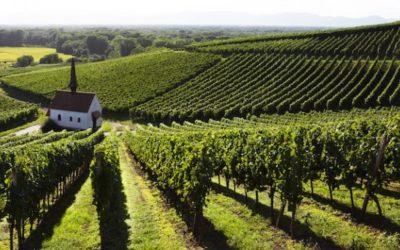 Serata Degustazione: I Bianchi Autoctoni