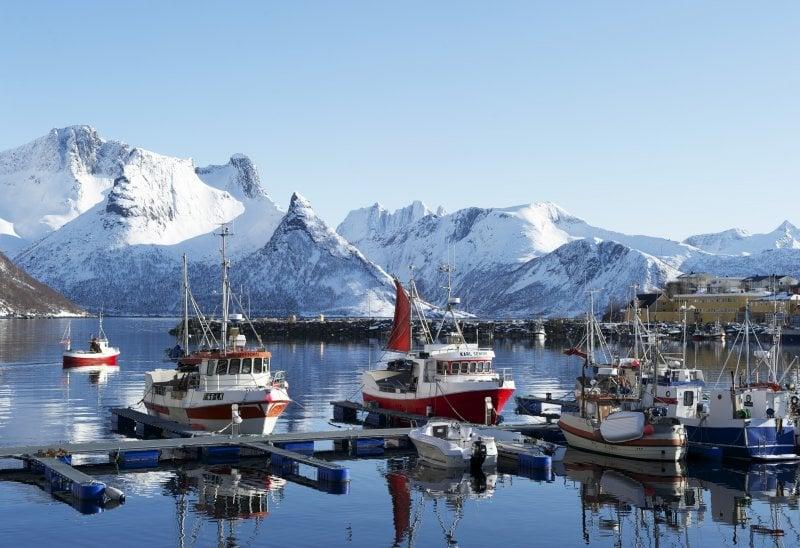 Serata Degustazione – Il baccalà islandese